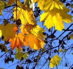Ноябрьское тепло скажется на здоровье